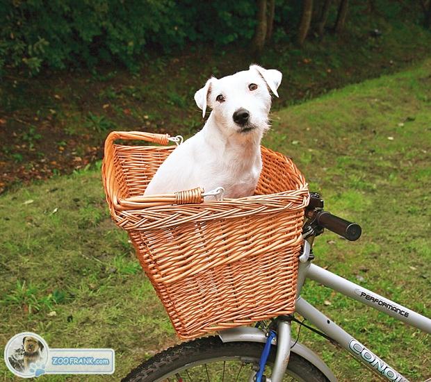 fahrradkorb for hunde fahrradanh nger und fahrradk rbe. Black Bedroom Furniture Sets. Home Design Ideas