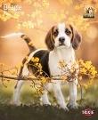 Kalender Beagle