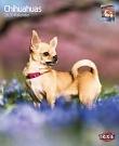 Kalender Chihuahuas