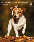 Kalender Jack Russell & Parson Jack Russell Terrier