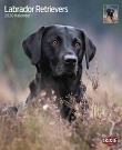 Kalender Labrador Retriever