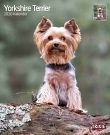 Kalender Yorkshire Terrier