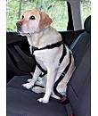 Hunde Sicherheitsgurt & Geschirr