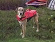 Schwimmweste Rettungsweste für Hunde