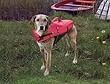 Schwimmweste Rettungsweste f�r Hunde