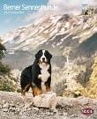Kalender Berner Sennenhund