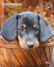 Kalender Hundewelpen