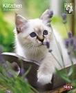 Kalender Kätzchen - Katzenkinder
