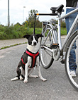 Biker Set - Fahrradhalterung für Hunde