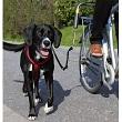 Fahrradhalterung für Hunde - Stabil