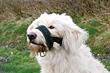 Maulschlaufe für große Hunde