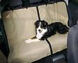 Hunde Autodecke