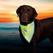 Sicherheits Halstuch für Hunde