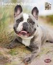 Kalender Französische Bulldoggen
